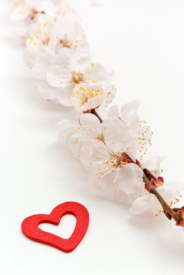 Inneres und Sakura. stockbilder