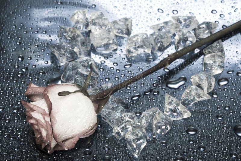Inneres vom Eis mit stieg lizenzfreies stockfoto