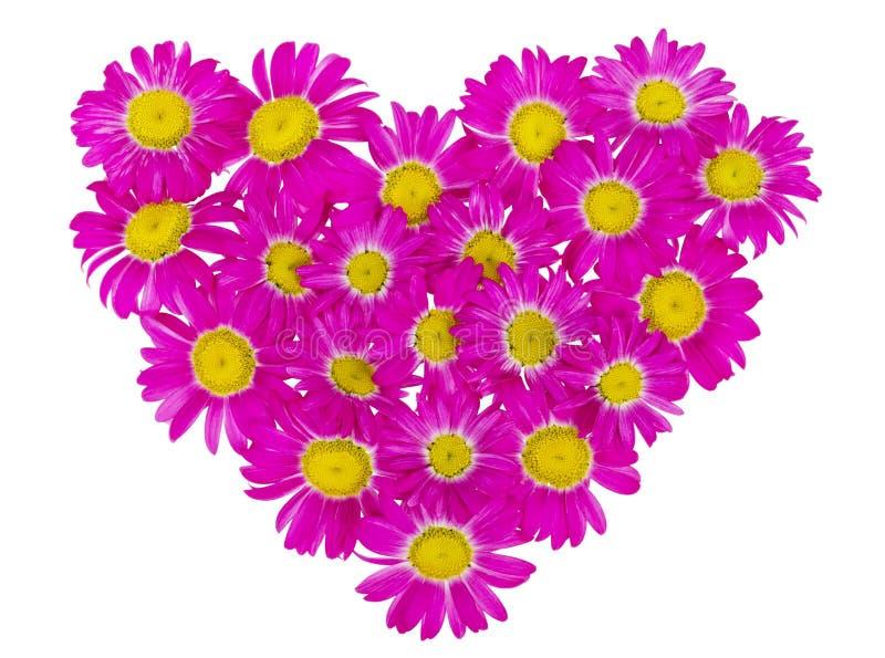 Inneres von den rosafarbenen Gänseblümchen lizenzfreie stockbilder