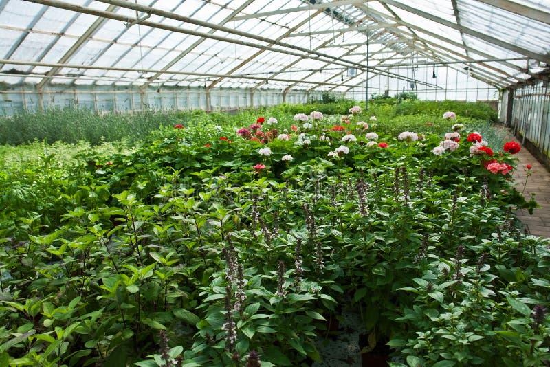Innerhalb eines Gewächshauses voll der Anlagen und der Blumen lizenzfreie stockfotos