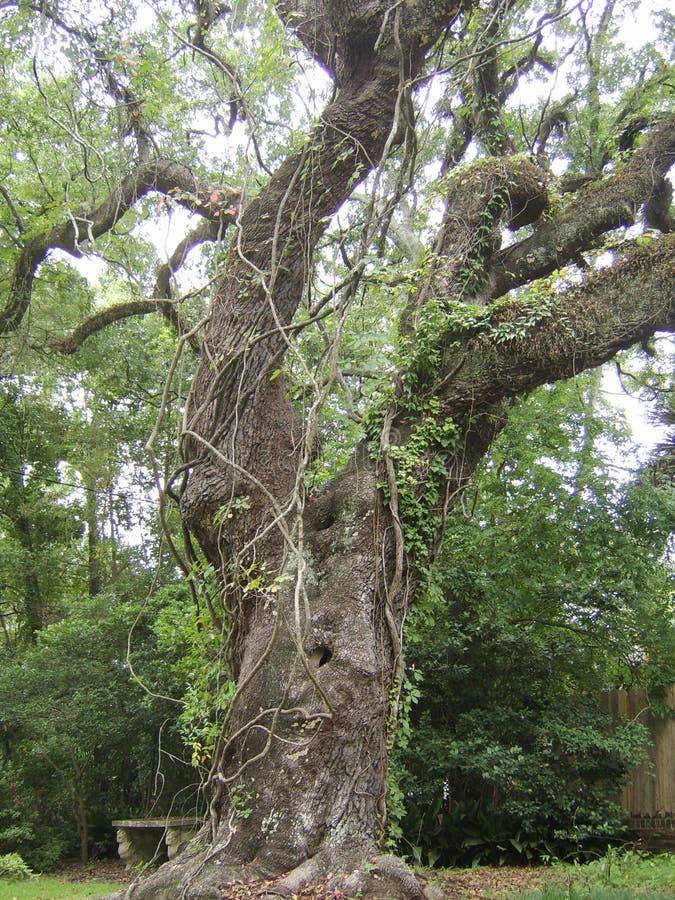 Inneslutat träd royaltyfri fotografi
