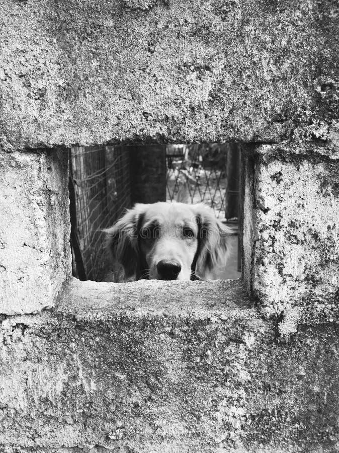 innocence in captivity stock image