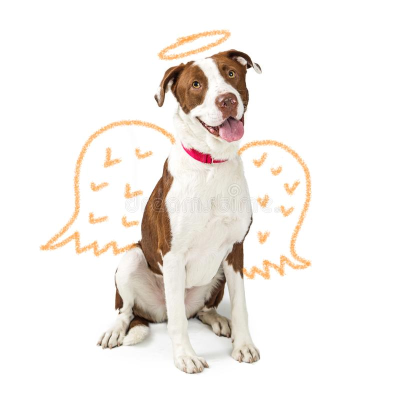Innocent Dog With Drawn Angel Wings. Concept of innocent good dog with crayon drawing of angel wings and golden halo royalty free stock image