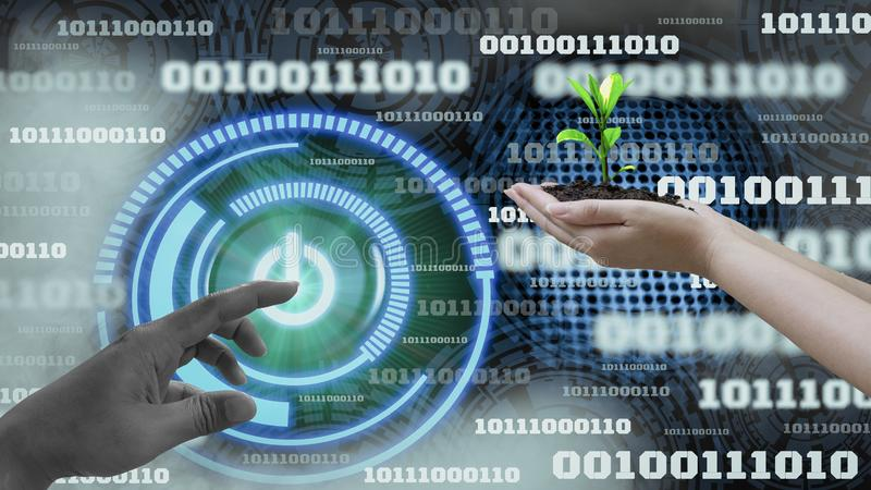 Innovation futuristic digital data binary code background technology ,with Switch on-off and hand holding seedlings, Concepts stock photos