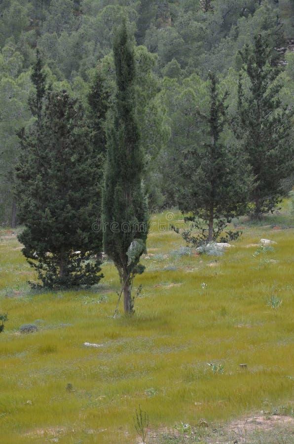 Inny obrazek Jerozolimscy wzgórza fotografia royalty free