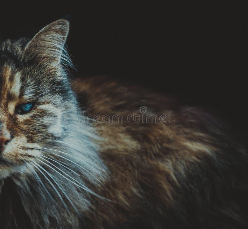 Inny piękno w kota ` s ciele zdjęcie stock