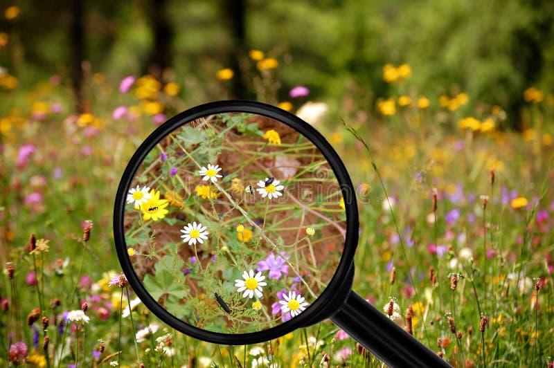 Inom den färgrika blommaängen Sikt till och med förstoringsapparaten arkivbild