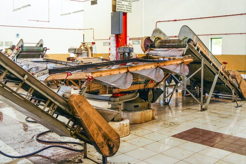 Inom en tefabrik arkivfoto