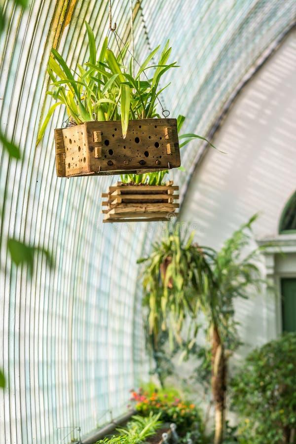 Inomhus av den växthusLednice slotten Nya växter, den tropiska djungeln och gömma i handflatan fotografering för bildbyråer