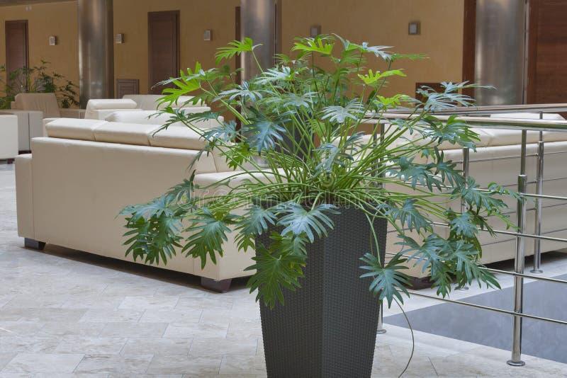 Inomhus dekorativ växt royaltyfria bilder