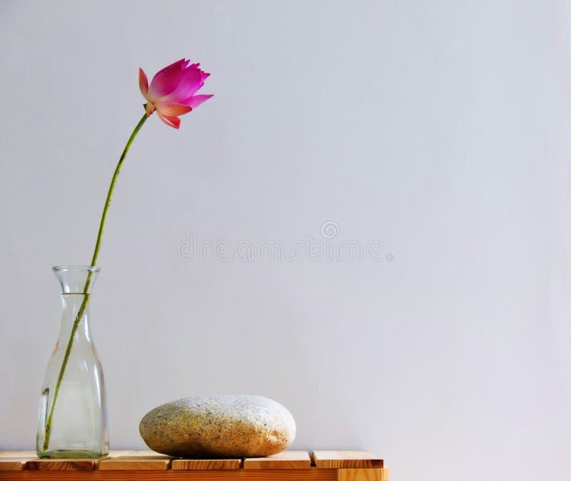 inomhus naturlig ordning fotografering för bildbyråer