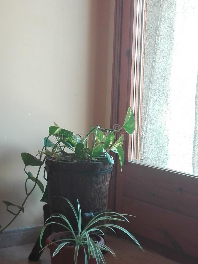 Inomhus rena växter arkivfoto