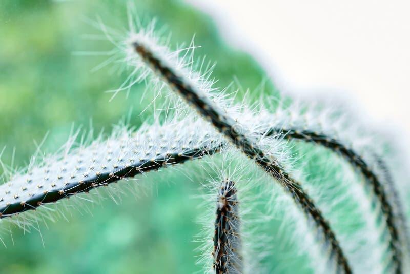 Inomhus växt grönt spiny för kaktus arkivfoto