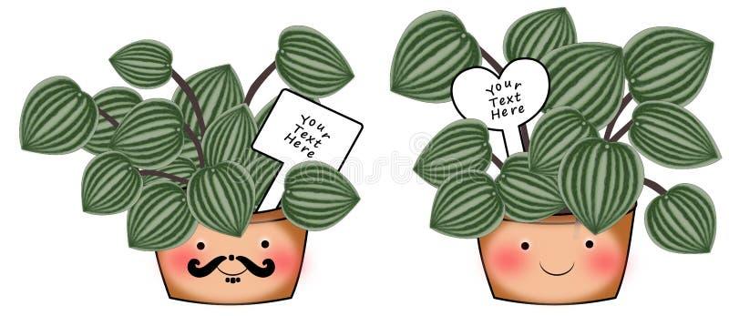 Inomhus växter peperomiaen Piccola Banda vektor illustrationer