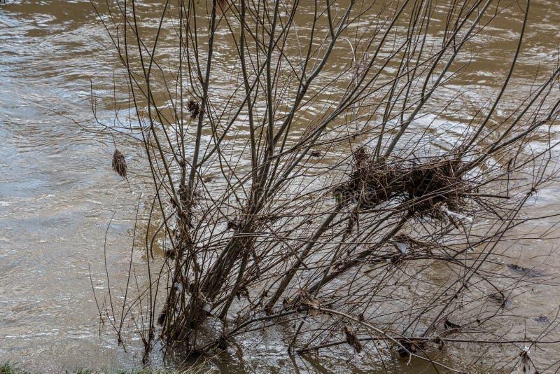 Inondation dangereuse avec de l'eau un arbre de noyade et brun sale photographie stock