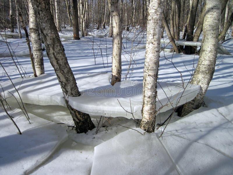 Inondation dans la forêt en hiver image stock