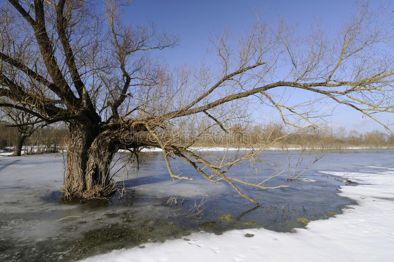 Inondation de l'hiver photo libre de droits