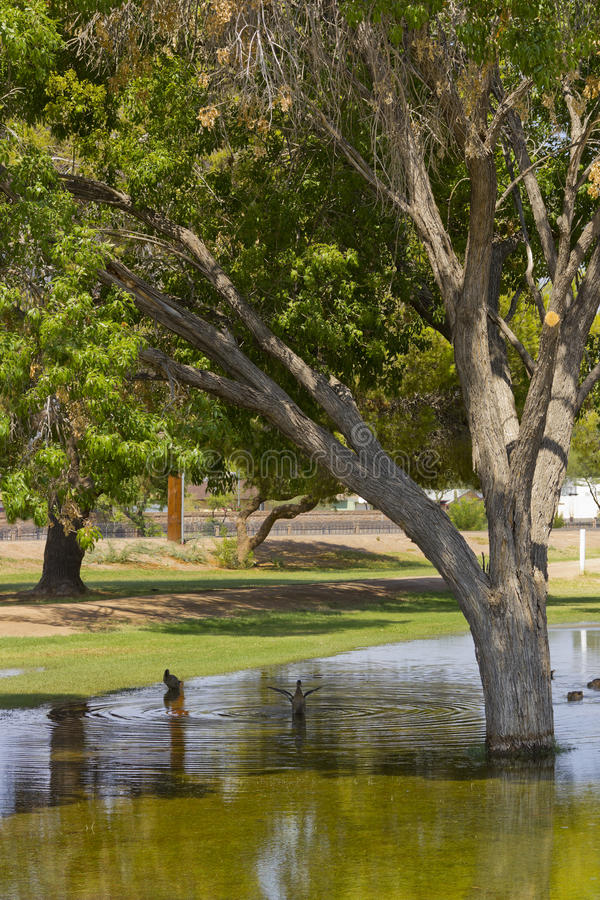 Inondation de mousson à Phoenix, AZ photographie stock