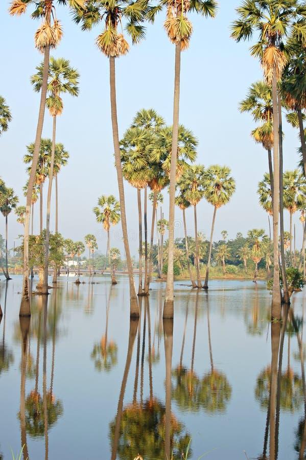 Inondation de paume images stock