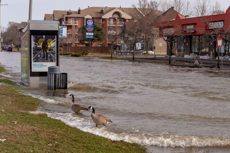 Inondation en printemps 2019 du Qu?bec photo stock