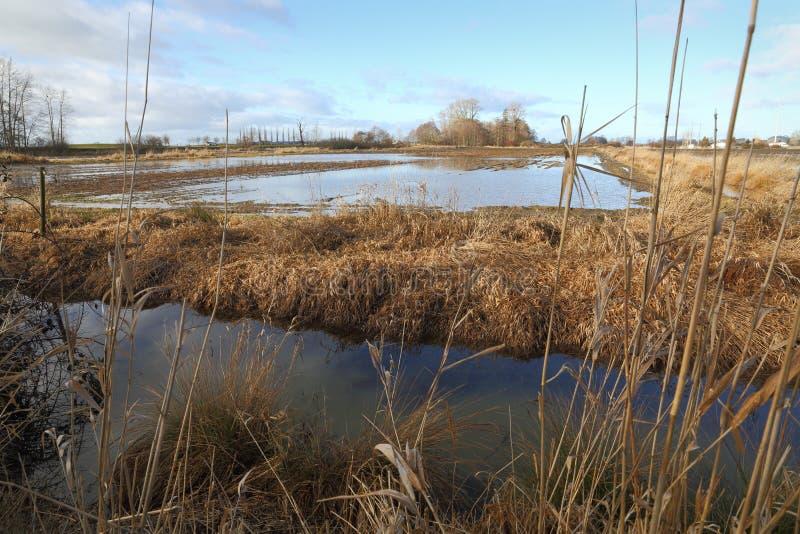 Inondazione, agricoltura, campo dell'azienda agricola fotografia stock libera da diritti