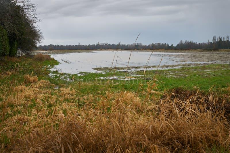 Inondazione del campo dell'azienda agricola fotografia stock