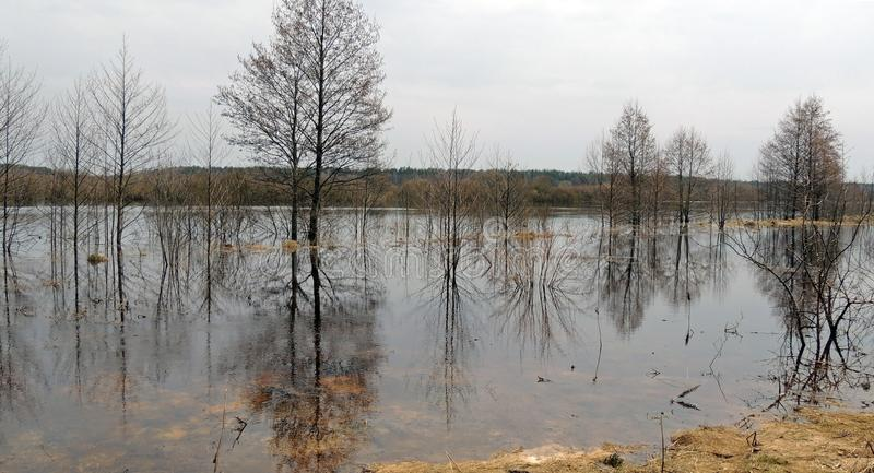 Inondazioni della primavera Sommergendosi nel terreno alluvionale del fiume di Berezina fotografia stock libera da diritti
