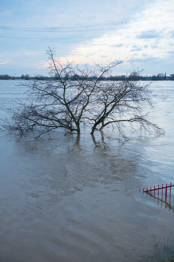 Inondez en hiver sur le Rhin avec l'arbre sous l'eau photographie stock