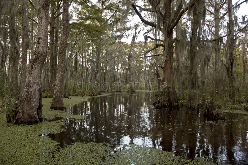 Inondez près de la Nouvelle-Orléans, Louisiane images stock