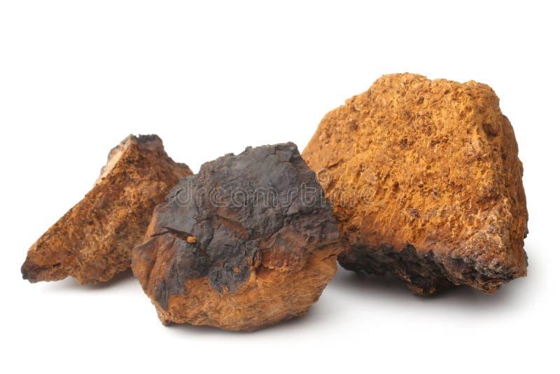 Inonotus del fungo di Chaga obliquus fotografia stock