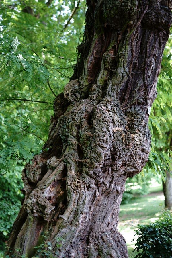 Inosculation auf dem Baum lizenzfreie stockbilder