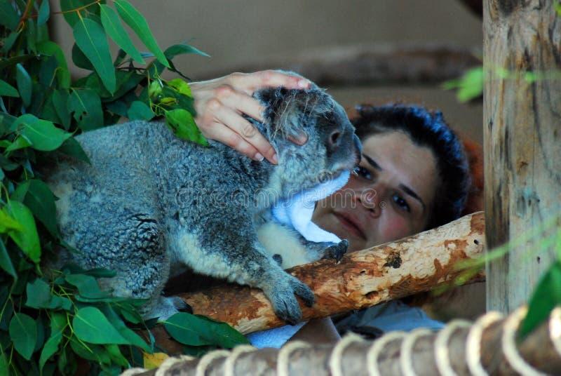 Inquietação com a coala foto de stock royalty free