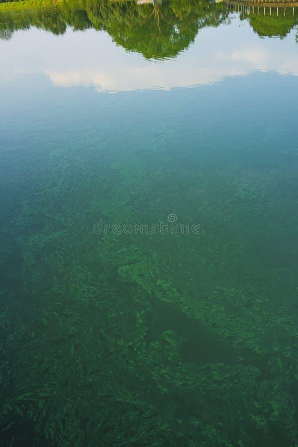 Inquinamento delle acque industriale dei rifiuti chimici sulla sponda del fiume con la foresta verde di fianco immagine stock libera da diritti