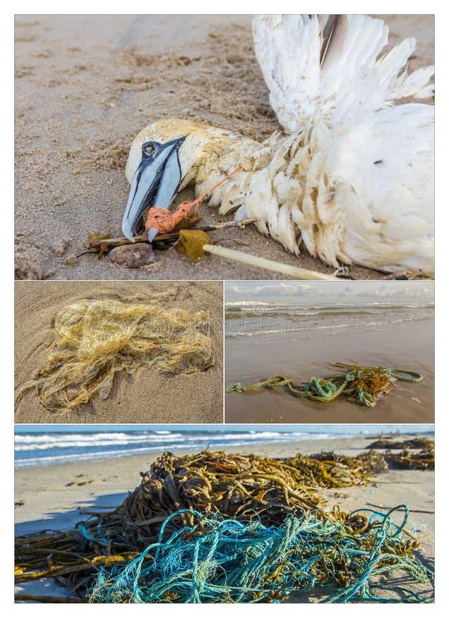 Inquinamento marino di plastica ed il suo impatto immagini stock libere da diritti