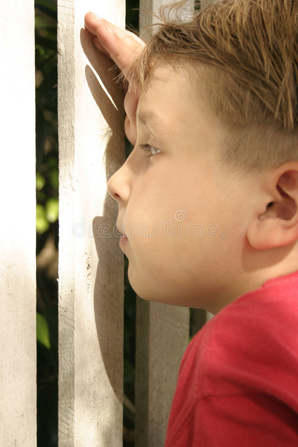 Inquisitive: Peering through a picket fence stock image