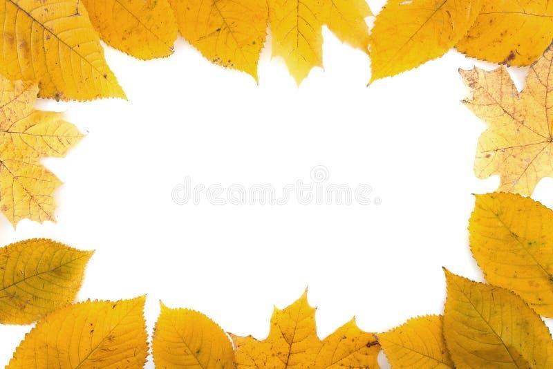 Inrama samlat av färgrika höstsidor som isoleras på vit backg arkivbild