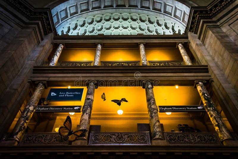 Inre arkitektur på det Smithsonian museet av naturliga Histo royaltyfri fotografi