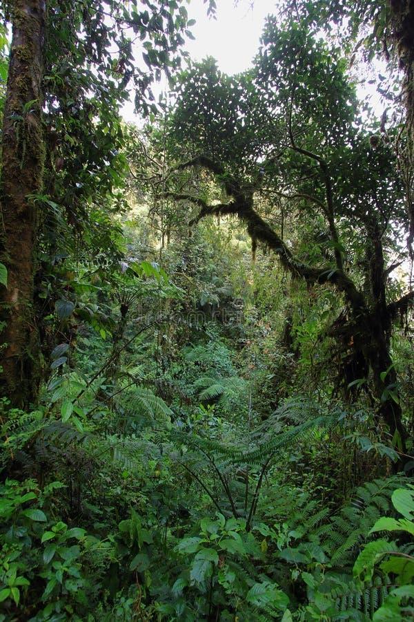 Inre av fuktig mest cloudforest royaltyfri bild