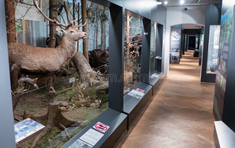 Inre av museet SMOPAJ, Liptovsky Mikulas - Slovakien arkivbilder