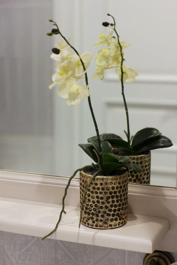 Inre blommaorkidé i krukan på hyllan i badrummet royaltyfri fotografi
