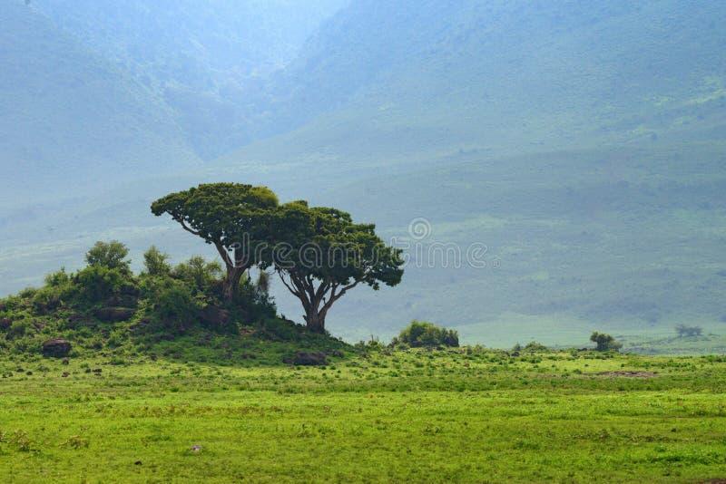 Inre Ngorongoro krater i Tanzania royaltyfria foton