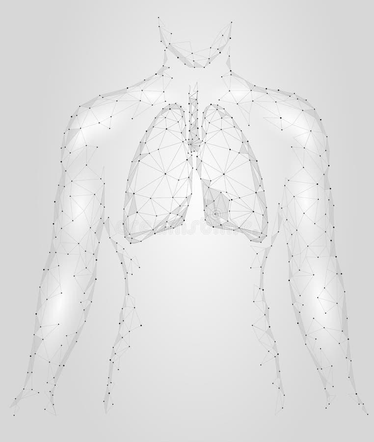 Inre organ för mänsklig infektion för lungor lung- För insidakropp för respiratoriskt system kontur Låga Poly 3d förbindelseDots  vektor illustrationer