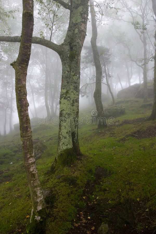 inre plats för dimmaskog under royaltyfri foto