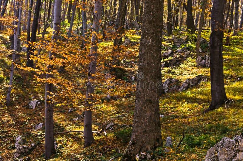 Inre skogar av den Djerdap nationalparken på en solig dag för nedgång arkivfoto