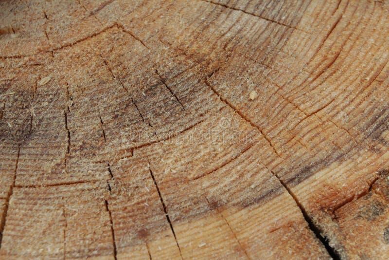 Inre stam för verklig träbakgrundstextur Stamträbakgrund Röd naturlig trätextur Trä mönstra Verkligt organiskt trä t royaltyfri foto