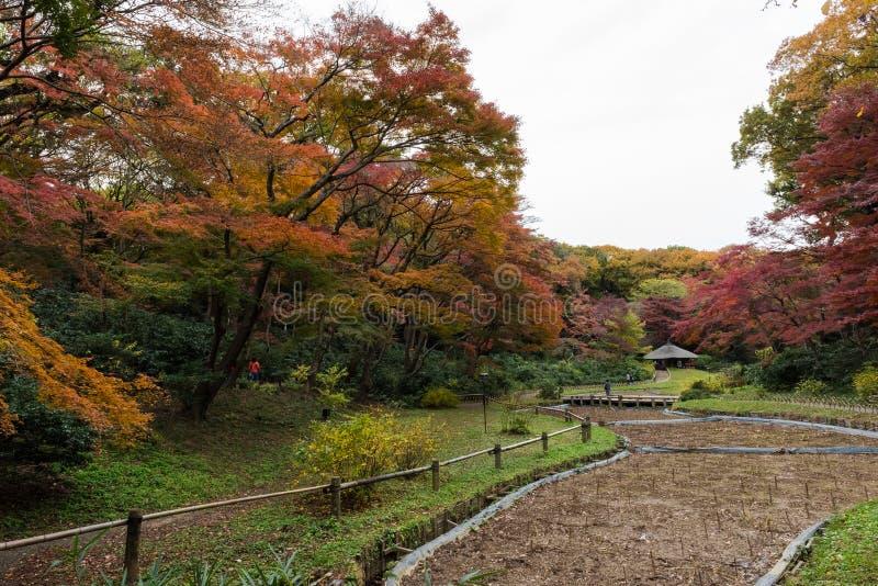 Inre trädgårdar på Meiji Jingu lokaliserade i Shibuya, Tokyo, Japan royaltyfria foton