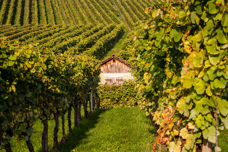 inre vingård royaltyfri fotografi