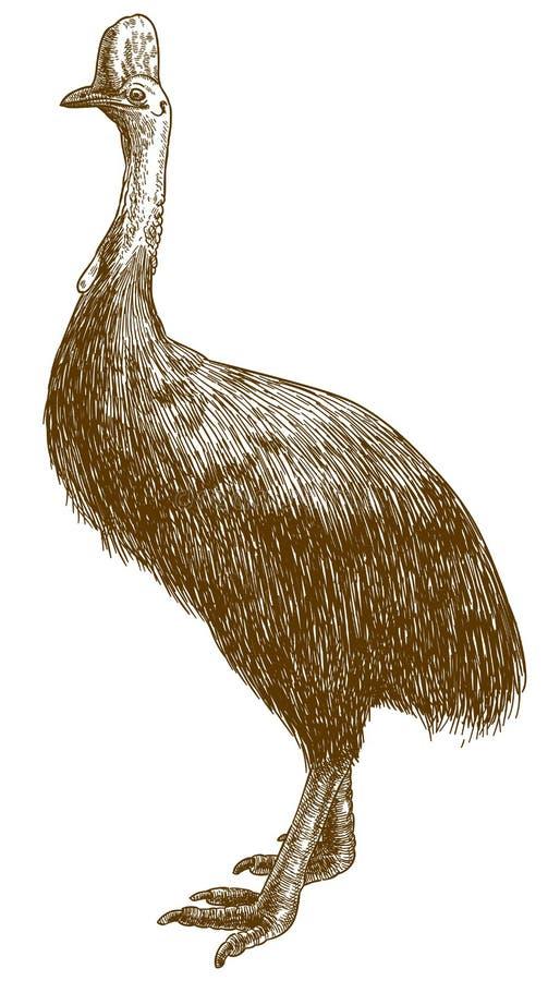 Inrista dra illustrationen av kasuarstrutsen royaltyfri illustrationer