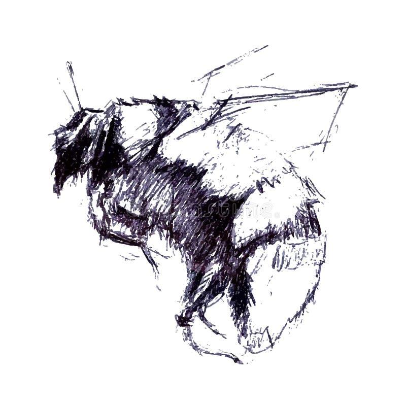 Inristad illustration för humla tappning Handteckningsvektorn utvidgar vektor illustrationer