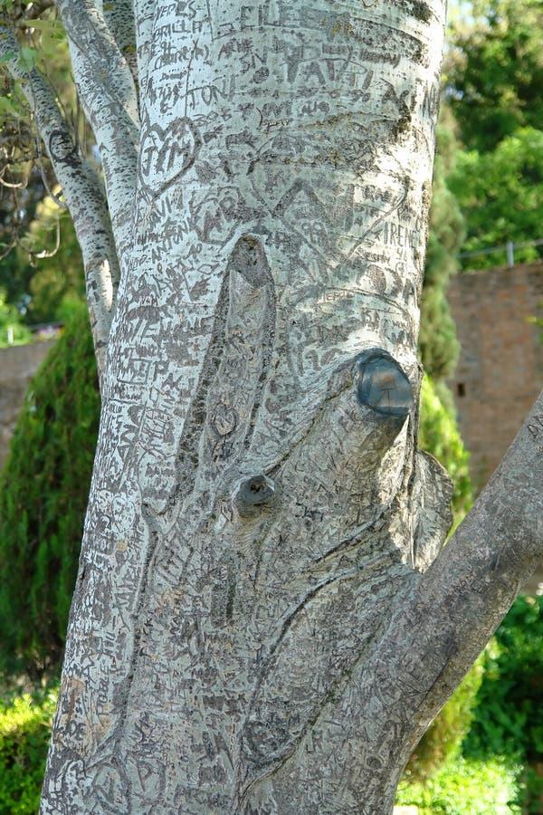 inristad tree arkivfoton